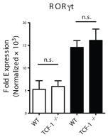 0.5 ng/mL human TGF-β1