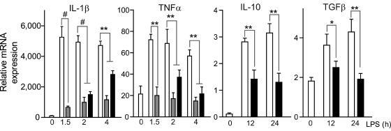 30 ng/ml recombinant IL-1β