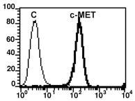 recombinant HGF