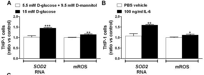 100 ng/ml recombinant IL-6