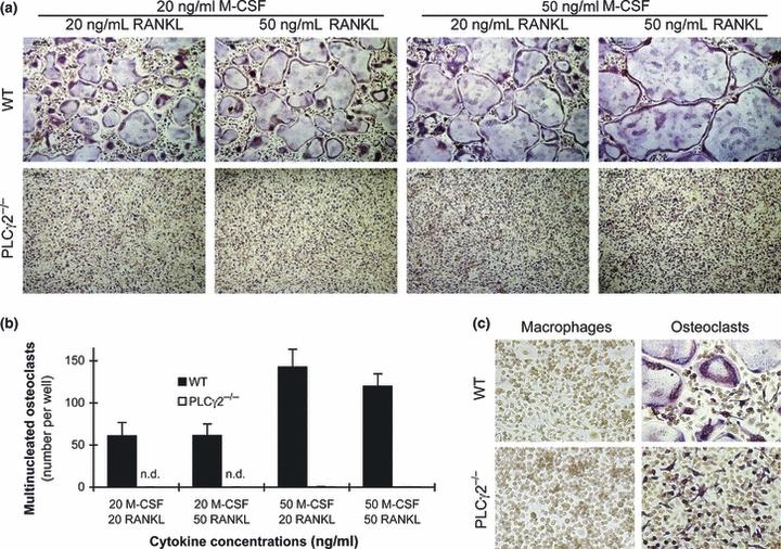 10 ng/mL recombinant mouse M-CSF