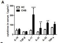 human recombinant cytokine IL-17