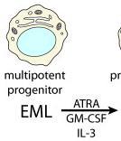 25 ng/ml recombinant murine IL-3