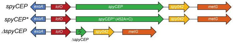 recombinant IL-8