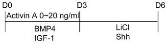 10 ng/ml recombinant human BMP4