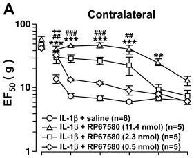 Recombinant rat IL-1β