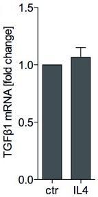 recombinant human TGFβ2