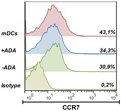 CCL21 chemokines