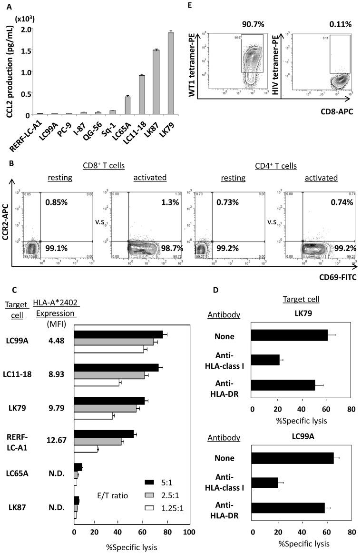 human recombinant CCL2