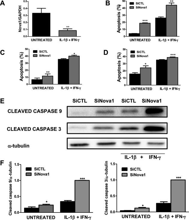 recombinant rat IFN-γ