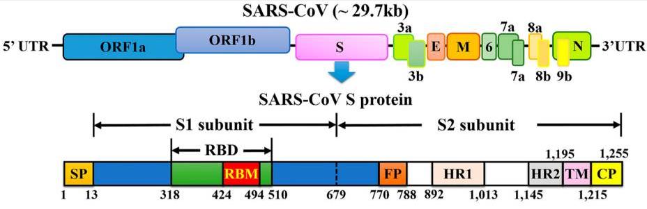 SARS-CoV Genome